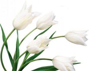 Цветы для всех