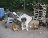 Одесса заботится о бездомных кошках и собаках
