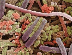 Найдены полезные бактерии для похудения