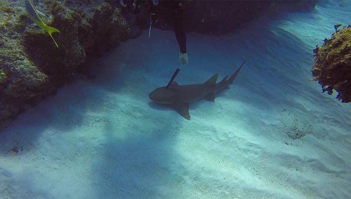 Дайверы сняли акулу сторчащим изголовы огромным кухонным ножом