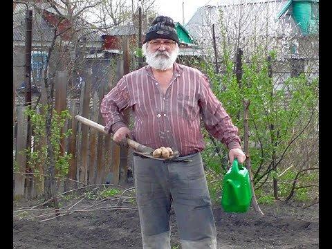 Российским дачникам запретили сажать картошку, огурцы и даже цветы