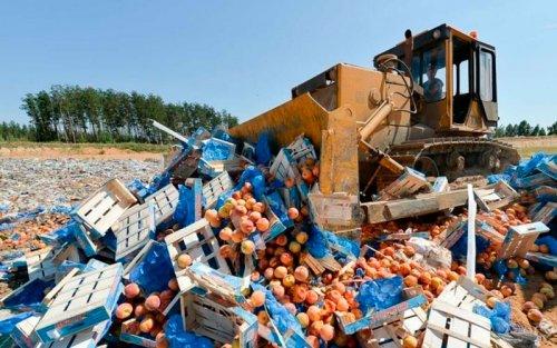 Санкционные продукты больше не будут утюжить бульдозерами